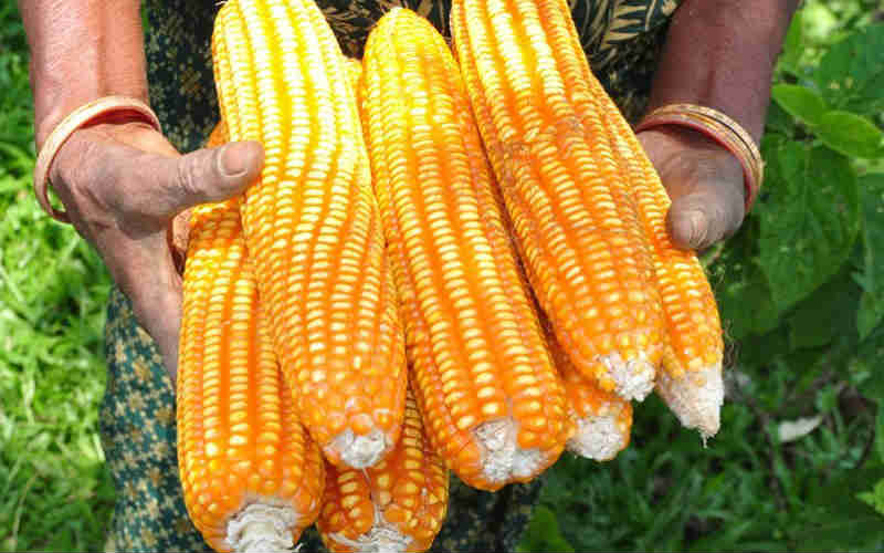 zambia-fsip-farmer-2015-2016