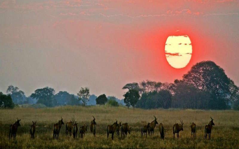 kafue-national-park-zambia
