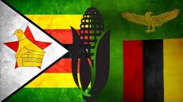 zambia-zimbabwe-corn-export