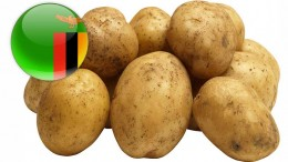 zambia-potato